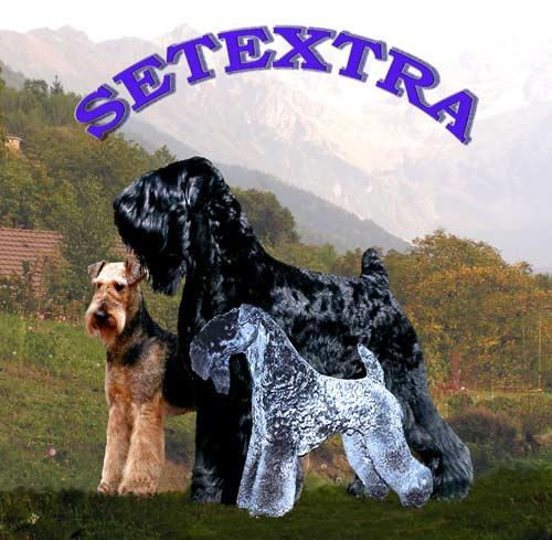 CHIENS : Setextra